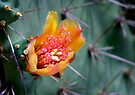 Prickly Beauty by Dave Lloyd
