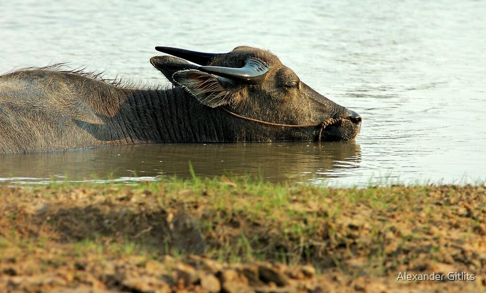 Buffalo in Water by Alexander Gitlits