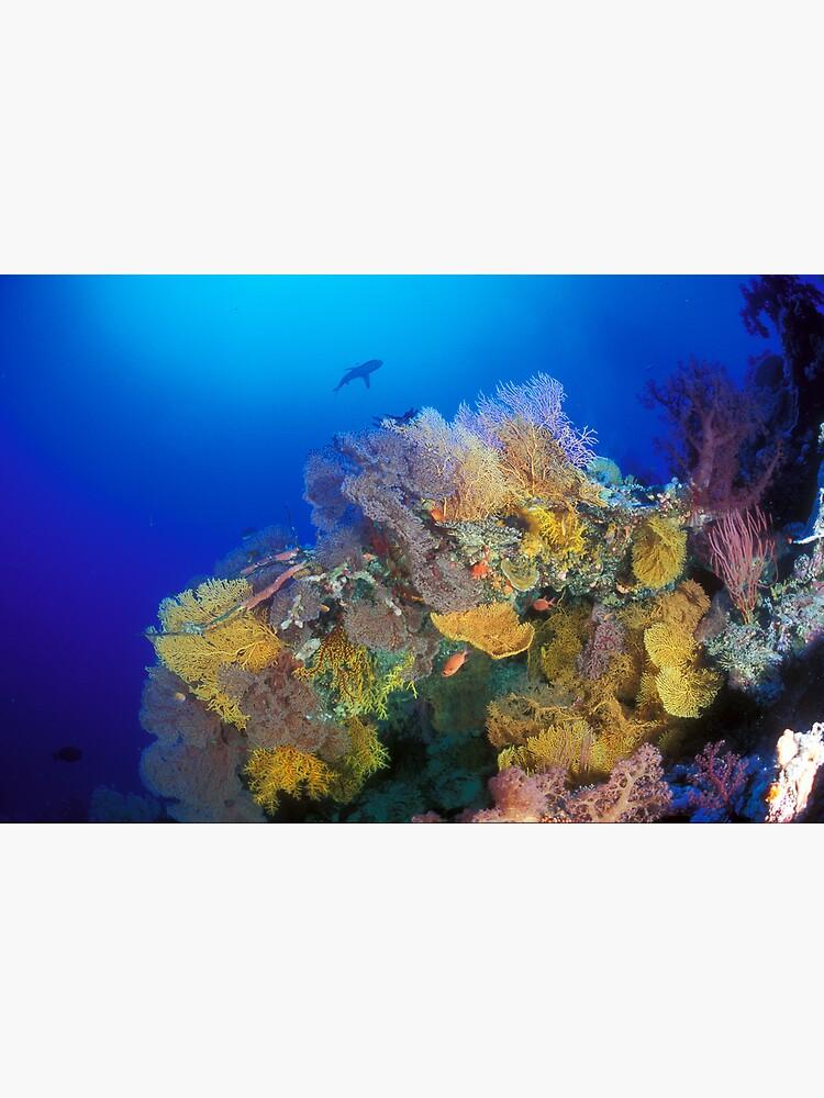 Osprey Reef silhouette by DavidWachenfeld
