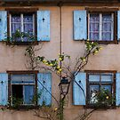 Blue Windows and Yellow Roses by Yair Karelic