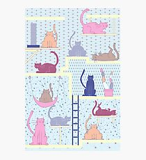 Tails and Ladders Photographic Print