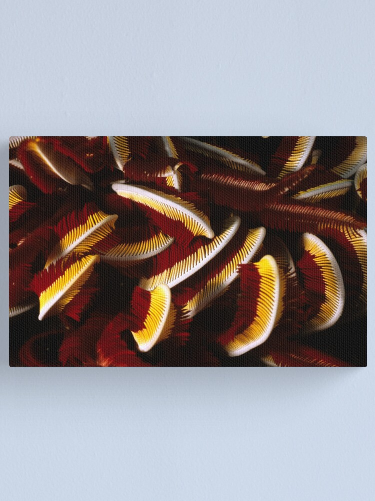 Alternate view of Feathers Canvas Print