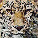 Leopard by Bakamuna