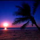Peaceful Palm by Penny Smith
