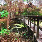 Bridge To Eden by Michael Reimann