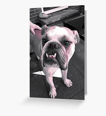 Winston Greeting Card
