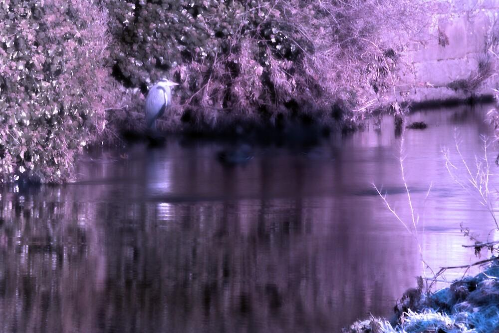 Winter Heron by Chris Clark