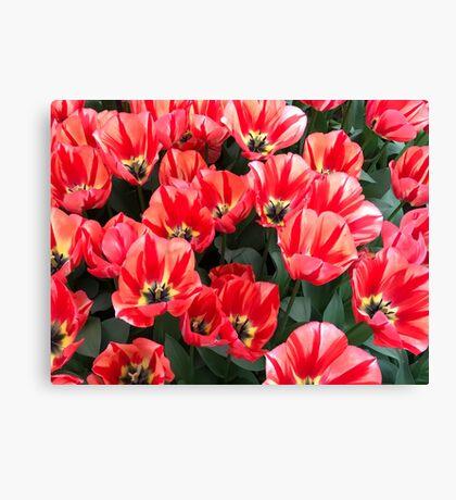Tulips from Keukenhof (NL) 2017 Canvas Print