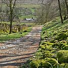 Lane at Chapel le Dale by Sue Knowles