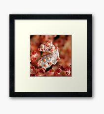 Pygmy seahorse Framed Print