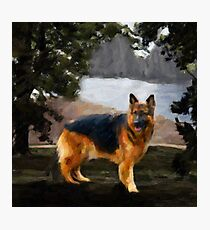 The German Shepherd Photographic Print