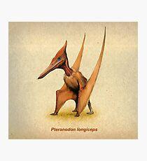 Pteranodon Photographic Print