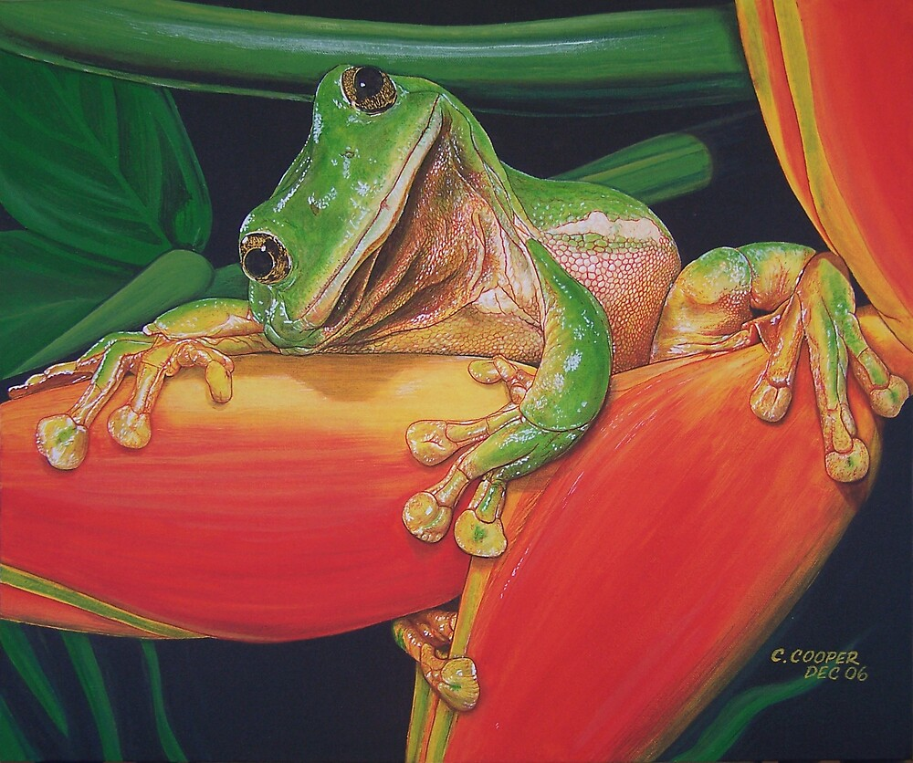 Resting Frog by Christopher  Cooper