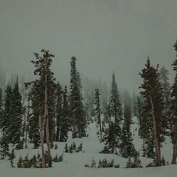 Winter Forest by adventurlings