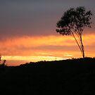 fire sky by veins