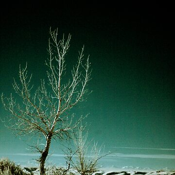 The Lonely Tree by JonathanEpp