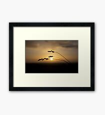 Sun Over Field Framed Print