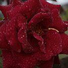 roze 'n' rain red by veins