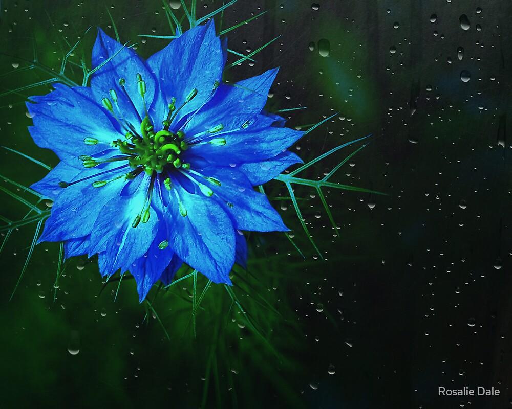 Bleu . . . by Rosalie Dale