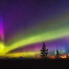 Denali & Aurora by Owed To Nature