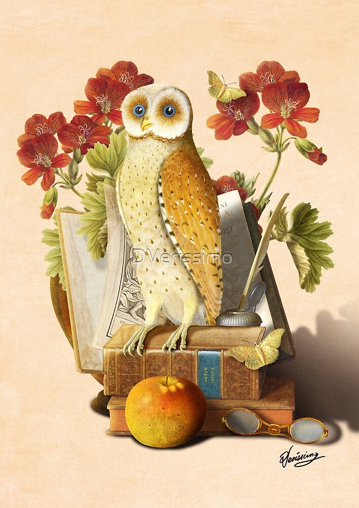 Apprentice Owl by DVerissimo