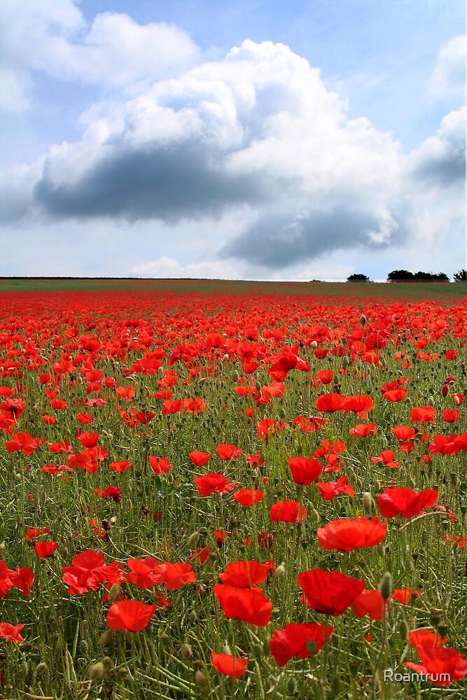 Poppy Field by Roantrum