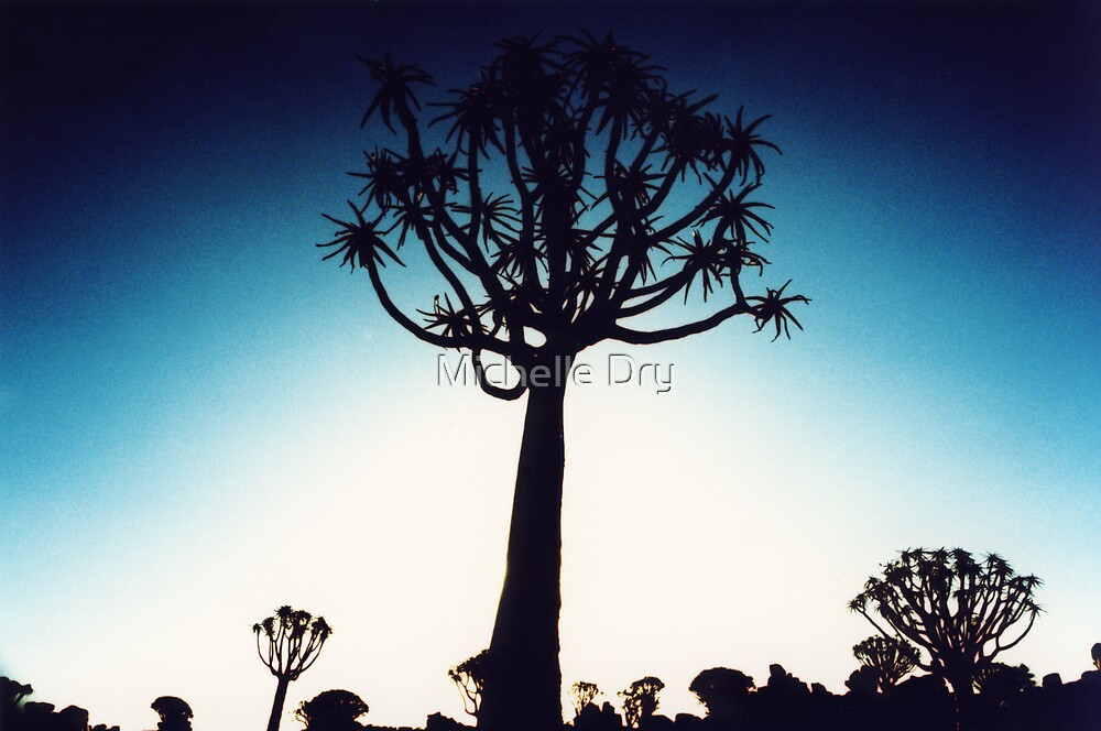 Quiver tree silhouhette by Michelle Dry