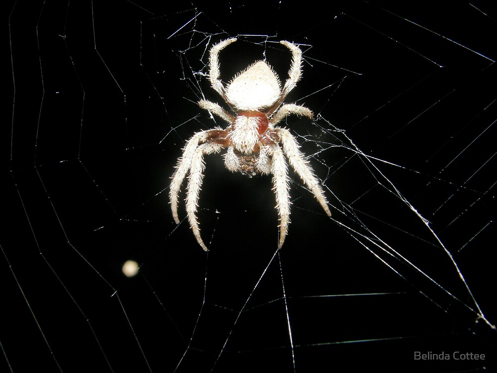 spider and the moon by Belinda Cottee