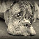 Luthien's Portrait In Monochrome - Boxer Dog Series by Evita