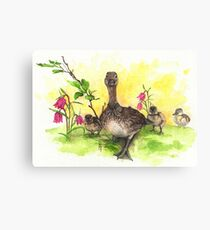 Mother Duck with Babies Canvas Print