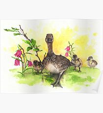 Mother Duck with Babies Poster