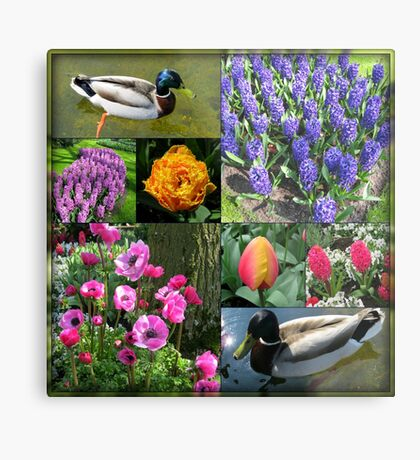 Flowers and Feathers - Keukenhof Collage Metallbild