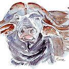 African buffalo or Cape buffalo (Syncerus caffer) by Maree Clarkson
