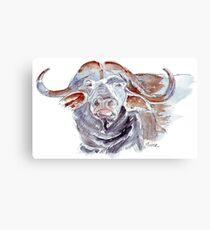 African buffalo or Cape buffalo (Syncerus caffer) Canvas Print