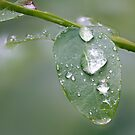 Droplets on Leaf (9574@21) by Barry L White