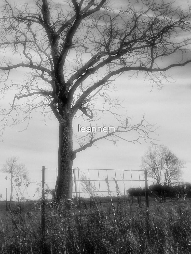 old tree by leannem