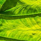 The Poetry of a Leaf by Thaddeus Zajdowicz