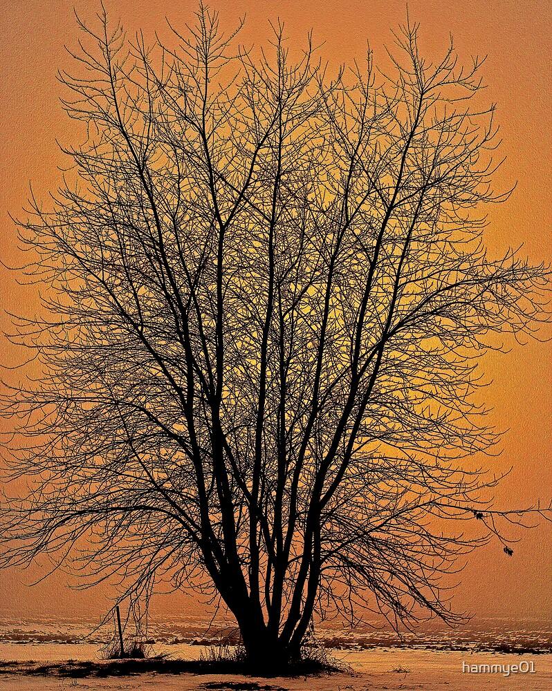 Golden Glow by hammye01