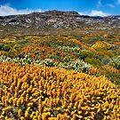 Ben Lomond National Park, Tasmania by Mark Higgins