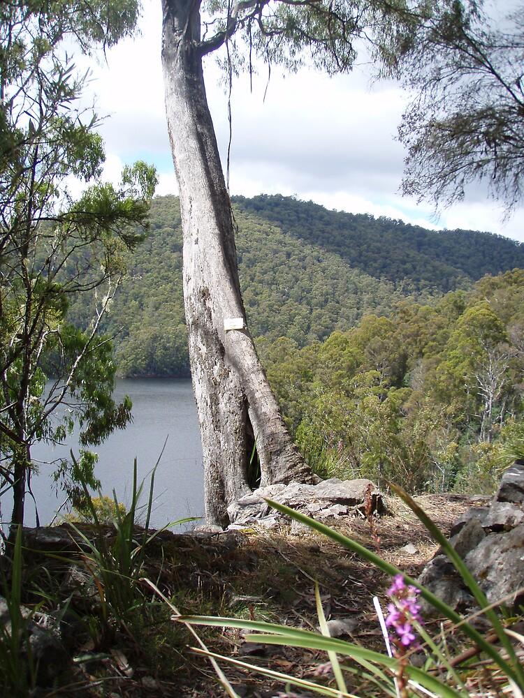 in the bush at Forth Falls, Wilmot, Tasmania - overlooking Lake Barrington by gaylene