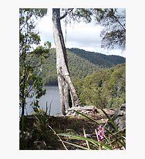 in the bush at Forth Falls, Wilmot, Tasmania - overlooking Lake Barrington Photographic Print