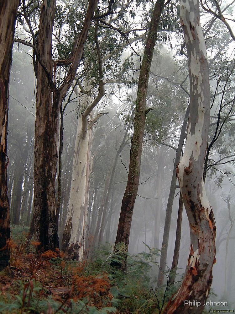 Ghosts in the Mist - Victorian Alps, Victoria Australia by Philip Johnson