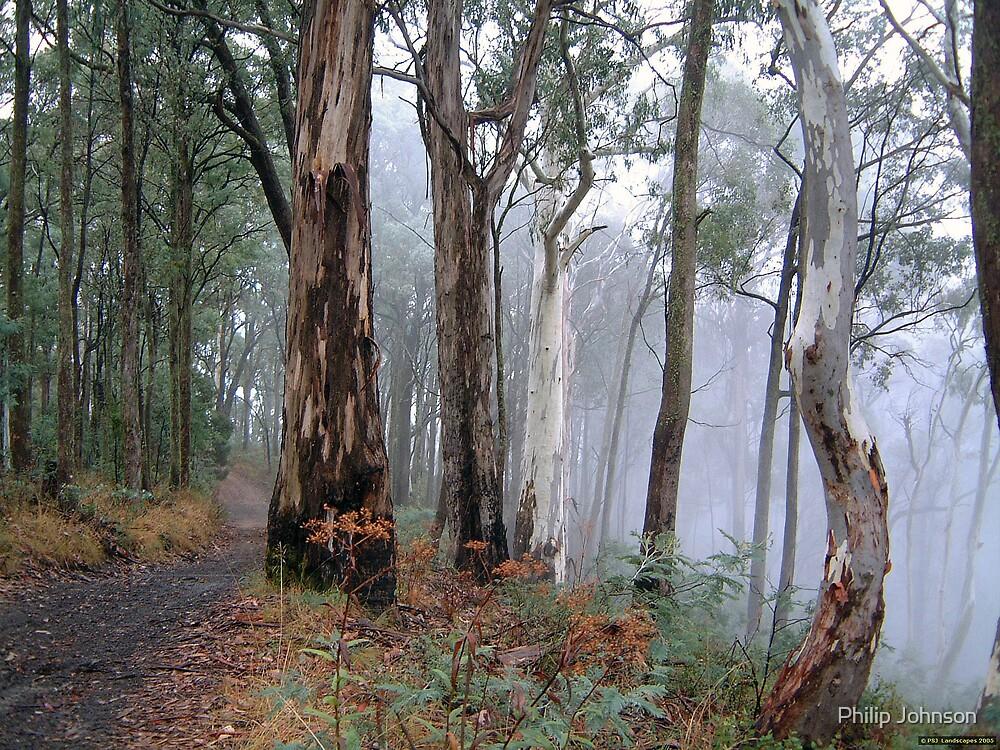 Road To Nowhere - Victorian Alps, Victoria Australia by Philip Johnson