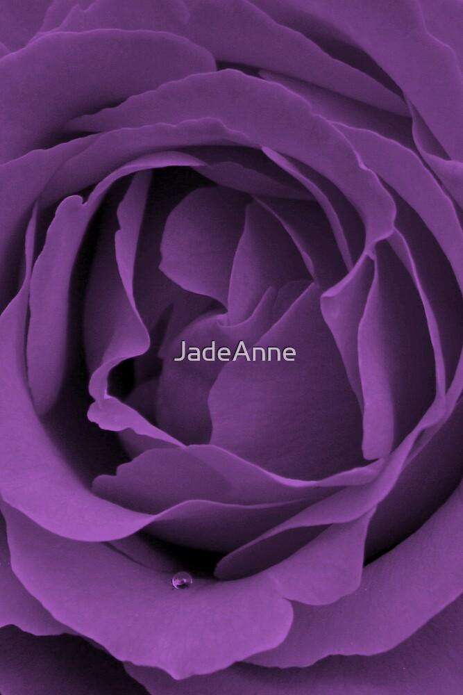 Purple Rose by JadeAnne