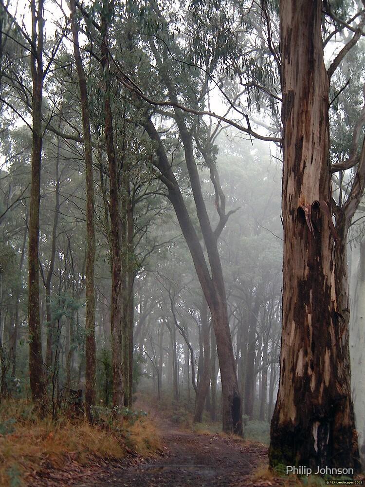 Alpine Dreaming - Great Alpine Road, Victoria Australia by Philip Johnson