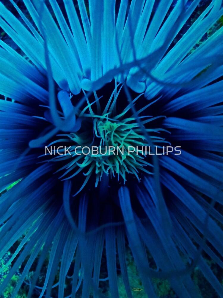 TENTACULAR VERNACULAR by NICK COBURN PHILLIPS