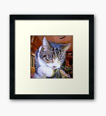 Feline Fur Cleaning Framed Print