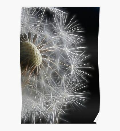 Dandelion Frost Poster