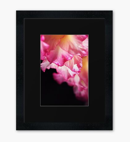 Beautiful Gladiolus Petals Pink Framed Print