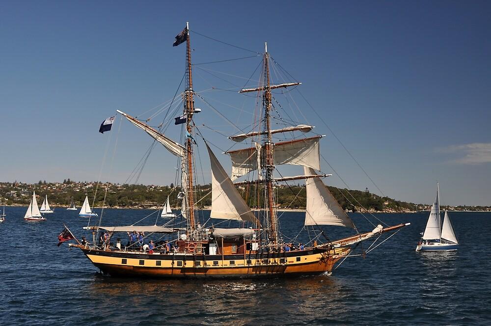 Windeward Bound, Sydney Harbour, Australia 2013 by muz2142